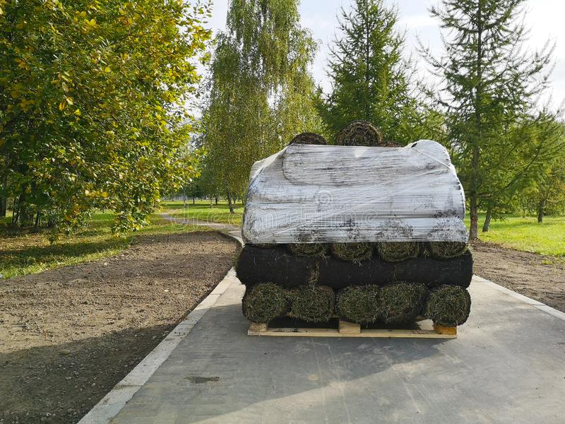 Rolls of natural green lawn laid on a pallet in the street royalty free stock image