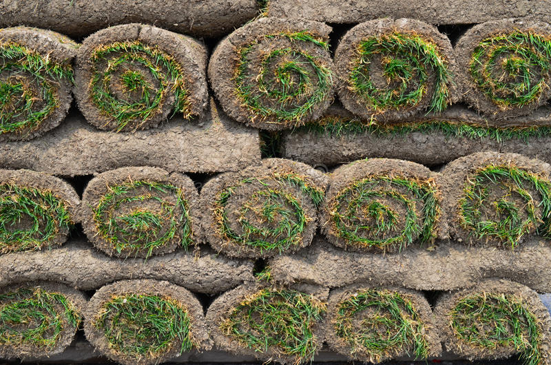 Rolls of turf sod for lawn. Rolls of grass sod for a new lawn royalty free stock photography
