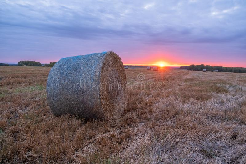 rolls of straw against a beautiful sunset on a mown wheat field stock photos