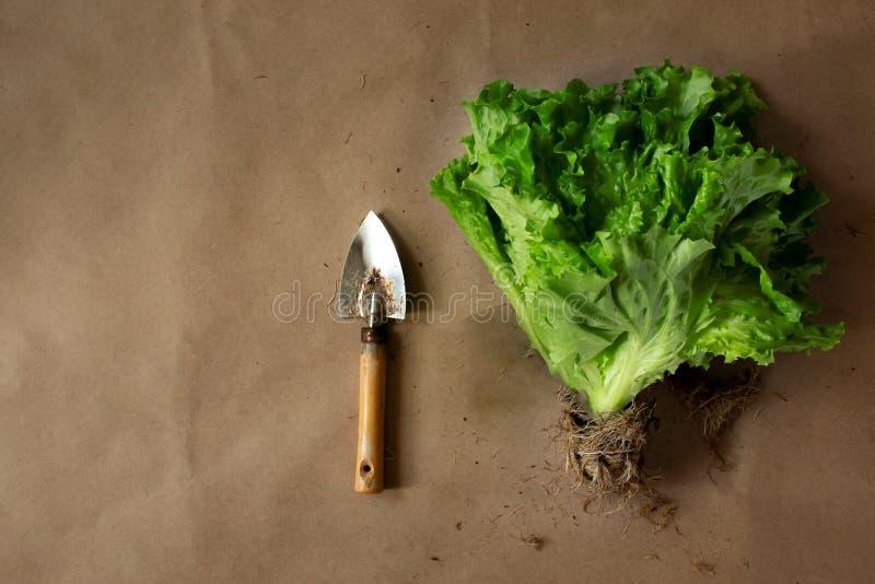 Rolna sałatka z korzeniami zdjęcia stock