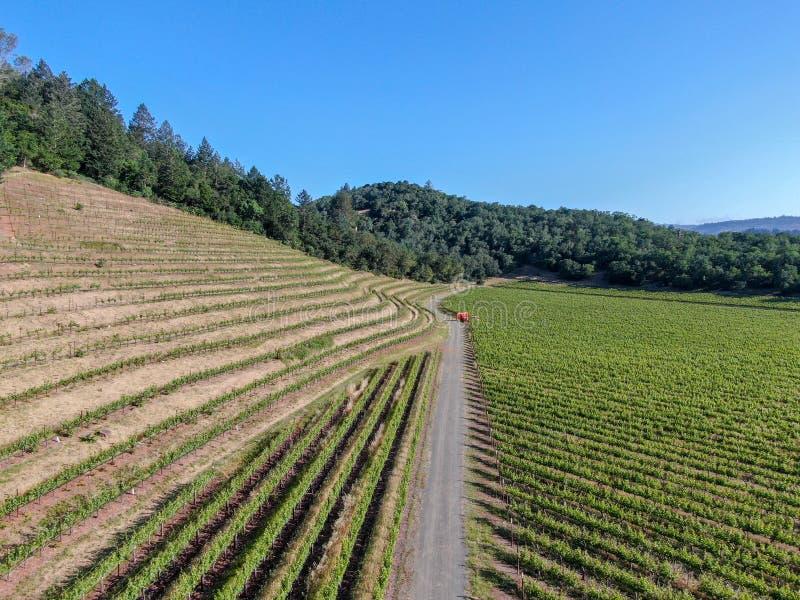 Rolnego ciągnika opryskiwania pestycydy & flit herbicydy nad zielonym winnicy polem obrazy stock