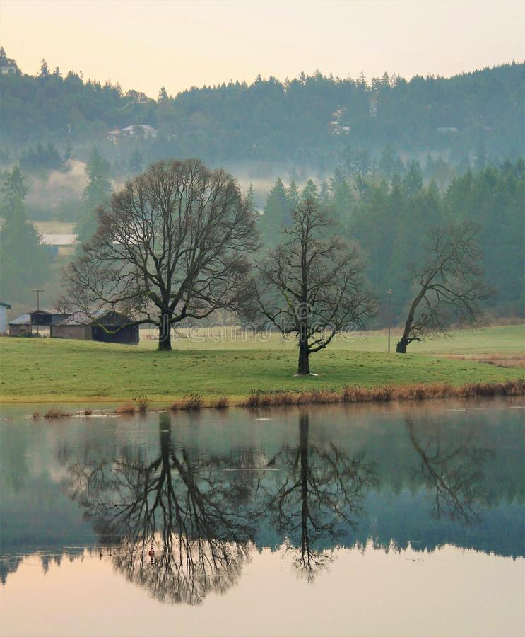 Rolnego i dębowego drzewa odbicia zdjęcia stock