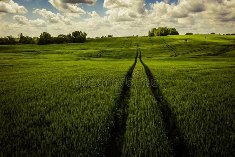 Rolnictwa żniwa naturalna plantacja na słonecznym dniu obrazy royalty free