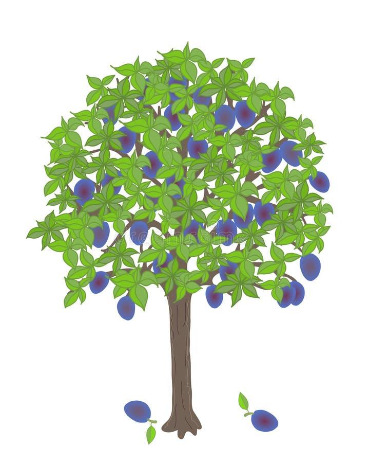 rolnictwa gałąź pojęcia owoc śliwkowy smakowity drzewo ilustracja wektor