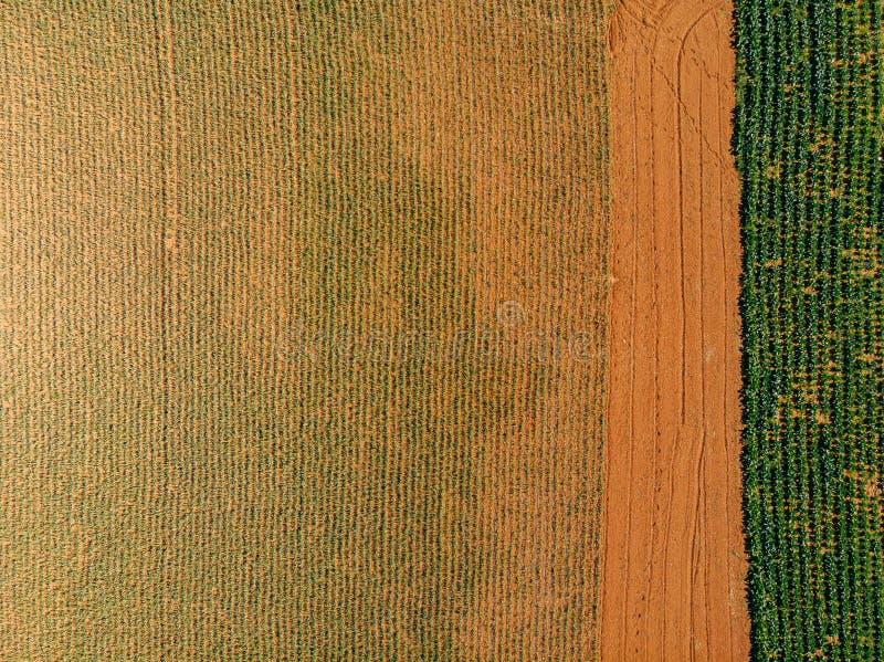 Rolnictwa pojęcia gospodarstwo rolne Pola i szklarnie dla rośliien i warzyw Powietrzny odg?rny widok obrazy royalty free