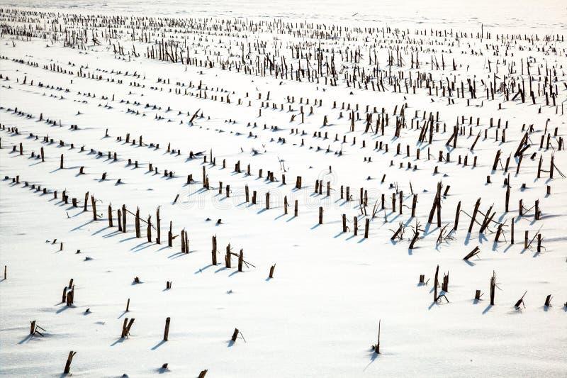 Rolnictwa pole w zimie fotografia stock