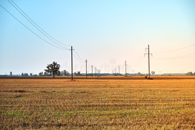 Rolnictwa pole z niebieskim niebem i liniami energetycznymi Wiejska natura w rolnej ziemi Słoma na łące obraz stock