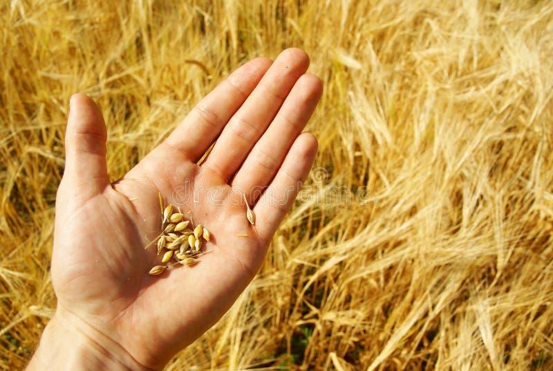 rolnictwa rolnika adra obraz stock