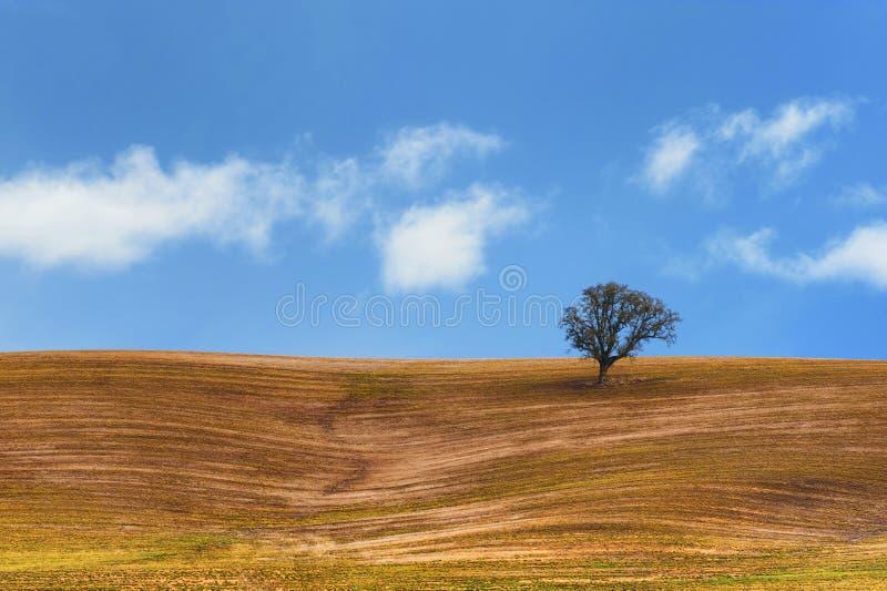 Rolnictwa zbocze z samotnym drzewem pod niebieskimi niebami i bielem chmurnieje zdjęcia stock