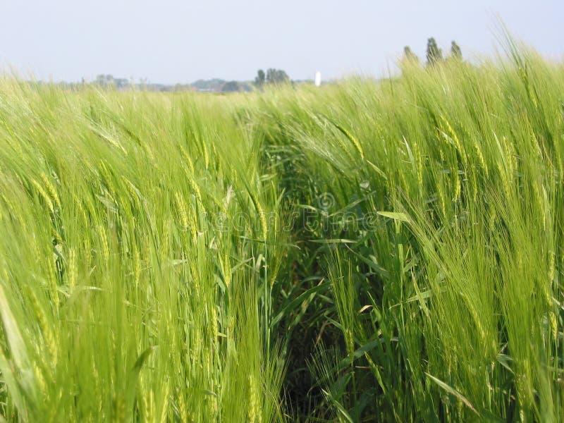 Download Rolnictwo obraz stock. Obraz złożonej z wiatr, uprawa, greenbacks - 194233