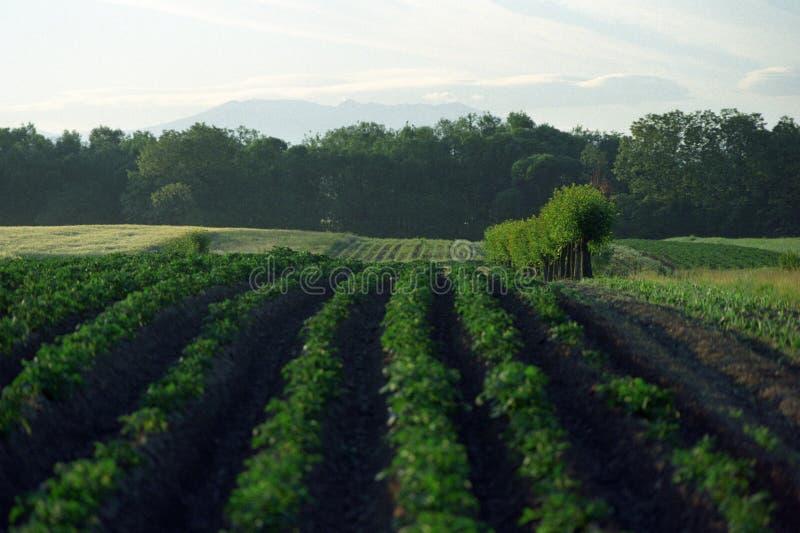rolnictwo obrazy stock