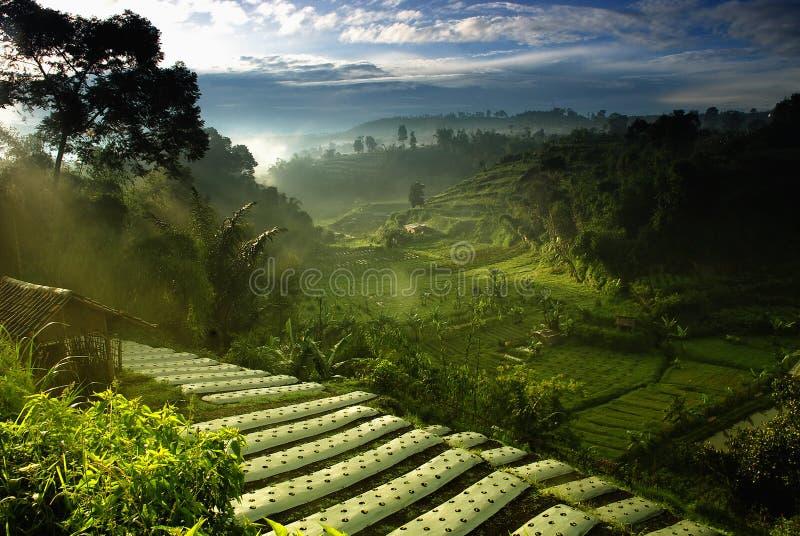 Rolnictwo Farmfield zdjęcie stock
