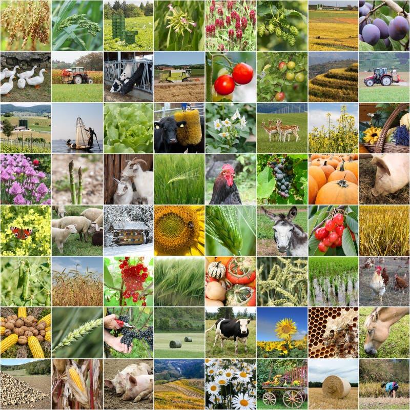 Rolnictwo kolaż od uprawiać ziemię i produktów obrazy stock