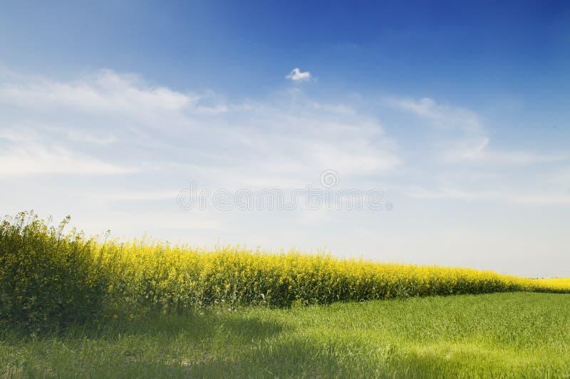 rolnictwo krajobrazu zdjęcie royalty free