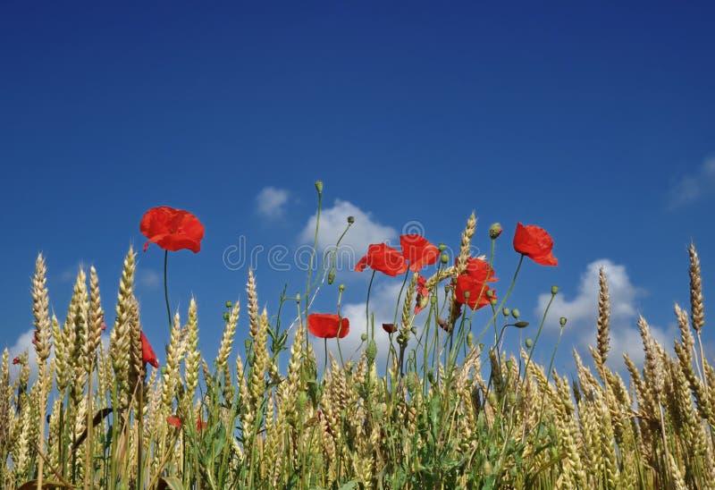 rolnictwo organicznie fotografia stock