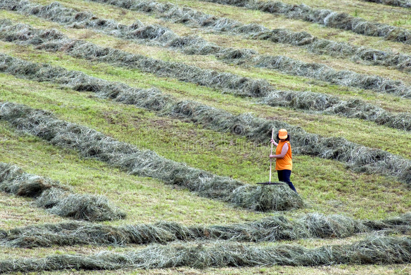 rolnictwo pracy obraz royalty free