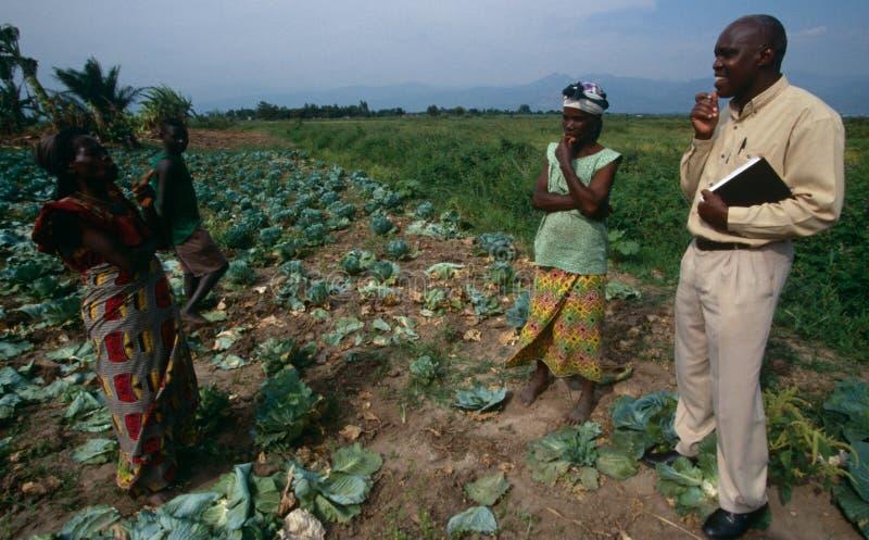 Rolnictwo projekt w Uganda zdjęcia stock