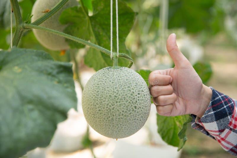Rolnictwo przemysł, uprawiać ziemię, ludzie i melonu rolny pojęcie, zdjęcie stock