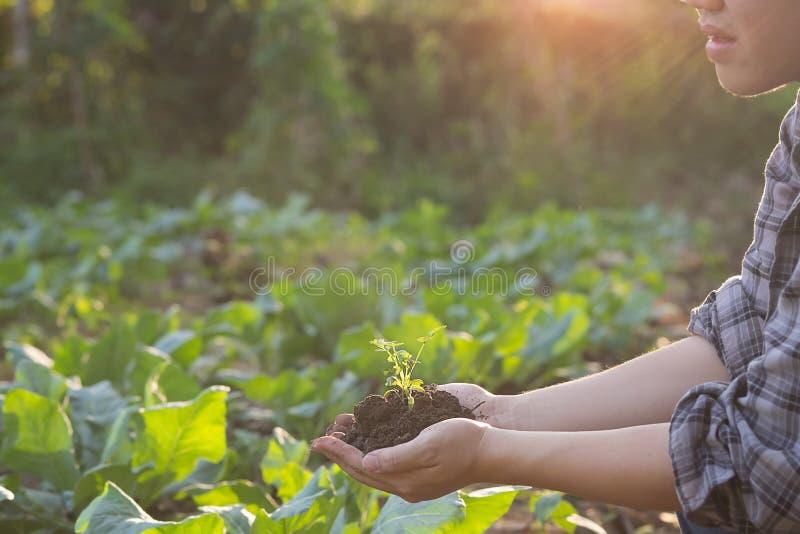 Rolnictwo ręka trzyma dziecka drzewny fotografia stock
