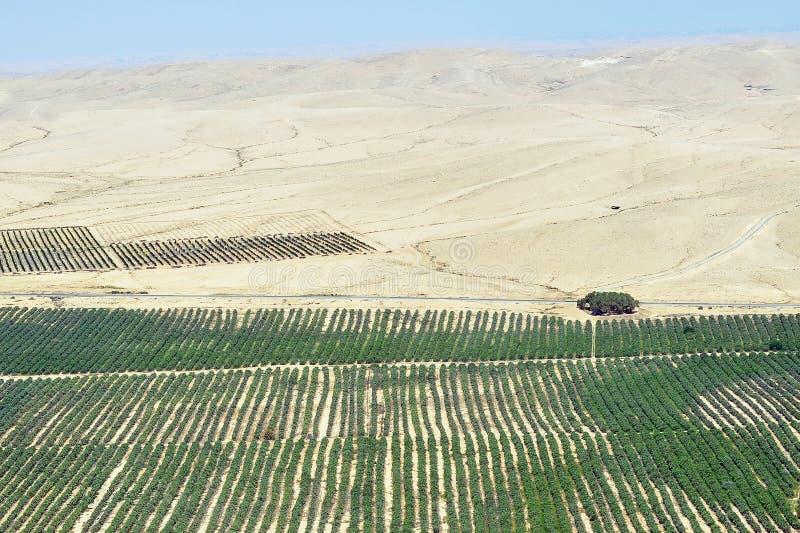 Rolnictwo - R w Pustyni zdjęcie stock
