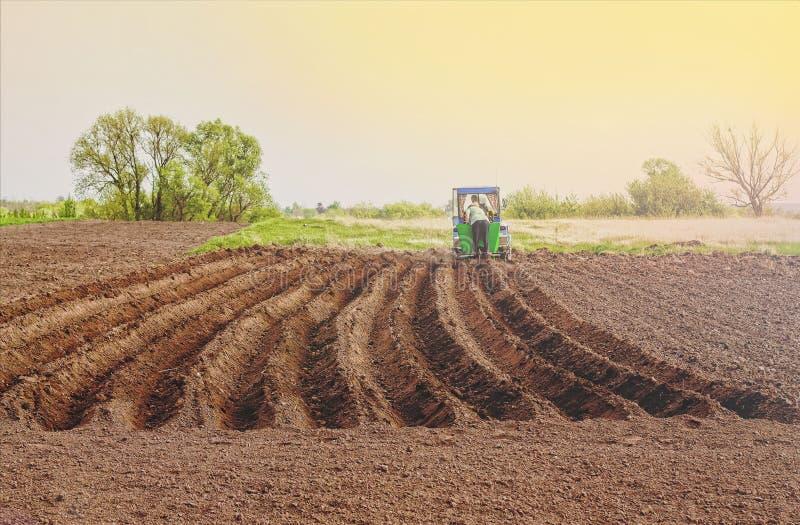 Rolnictwo, rolnik, grula, zasadza grule, wiosna, sia, zdjęcia royalty free
