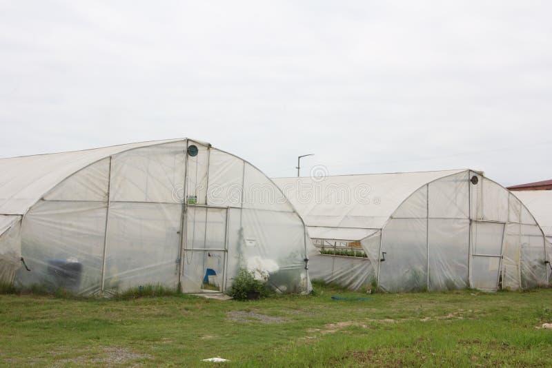 Rolnictwo szklarnia zdjęcie stock