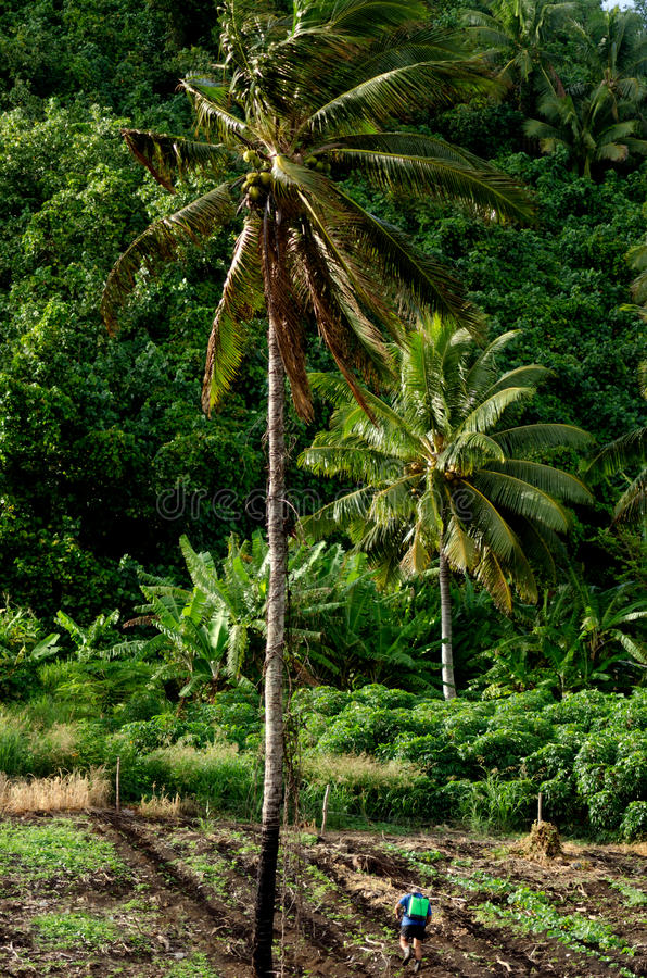Rolnictwo w Aitutaki laguny Kucbarskich wyspach obraz stock