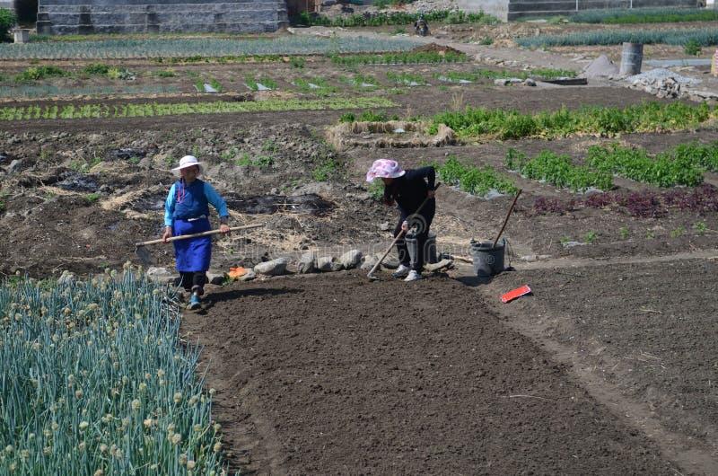 Rolnictwo w Chiny fotografia royalty free