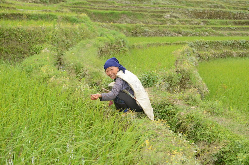 Rolnictwo w Chiny obraz royalty free