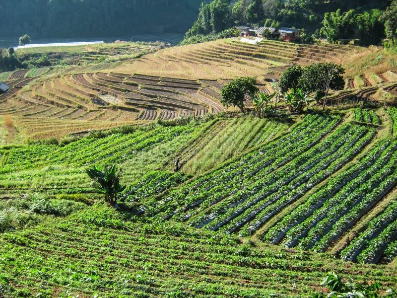 Rolnictwo w Doi Inthanon parku narodowym obrazy royalty free