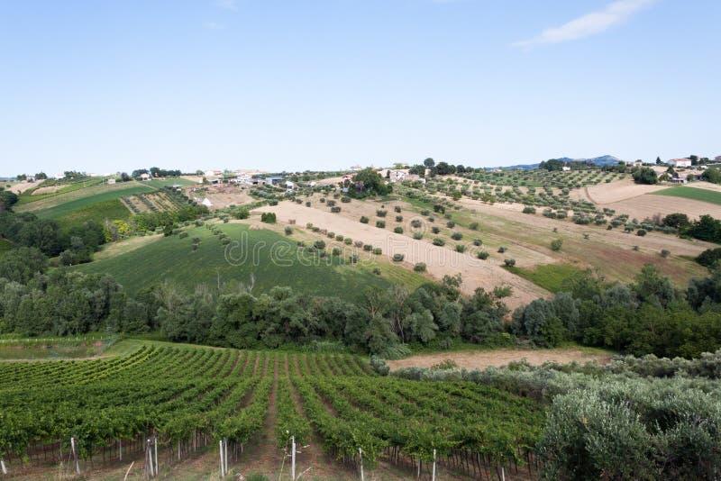 Rolnictwo, widok pola i gospodarstwa rolne w Italy, zdjęcie royalty free
