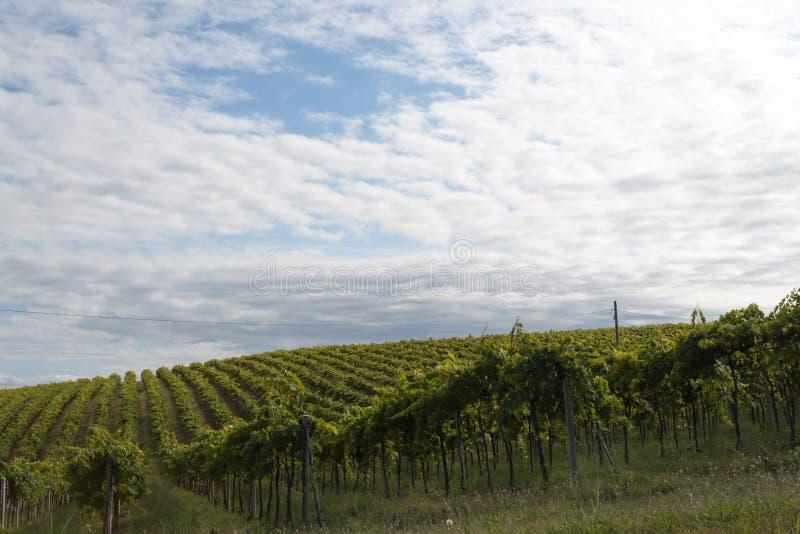 Rolnictwo, widok pola i gospodarstwa rolne w Italy, obraz royalty free
