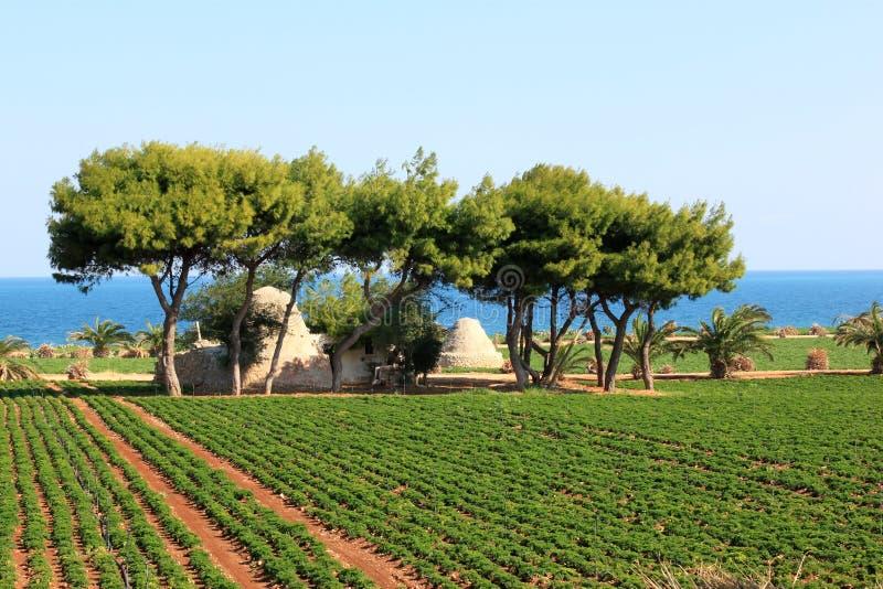 Rolnictwo wzdłuż Adriatyckiego morza, Włochy obrazy royalty free