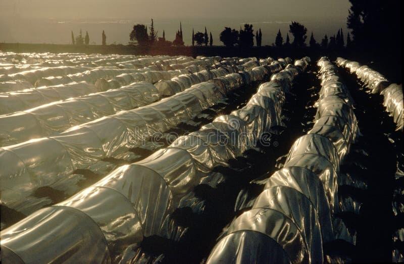 Rolnicze szklarnie, Jordanowski Dolinny Jordania fotografia stock