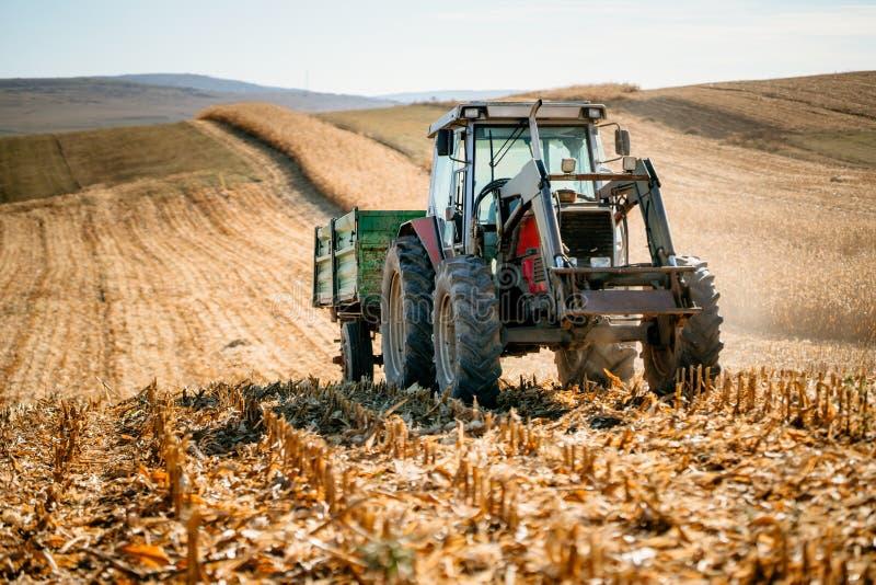 Rolniczy industy - Przemysłowy ciągnik z przyczepą pracuje kukurydzanych pola i zbiera podczas sezonu jesiennego obraz royalty free