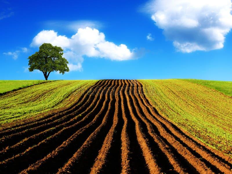 rolniczy krajobraz obraz stock
