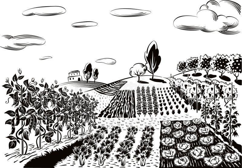 Rolniczy krajobraz, kultywujący z różnorodnymi warzywami ilustracja wektor