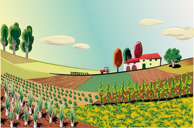 Rolniczy krajobraz, kultywujący z różnorodnymi warzywami i g royalty ilustracja