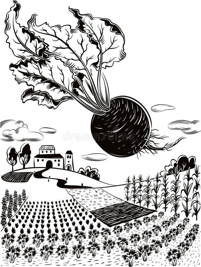 Rolniczy krajobraz z beetroot, royalty ilustracja