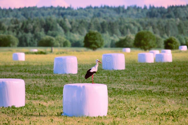 Rolniczy krajobraz z bocianami, siana próżniowy kocowanie zdjęcie stock