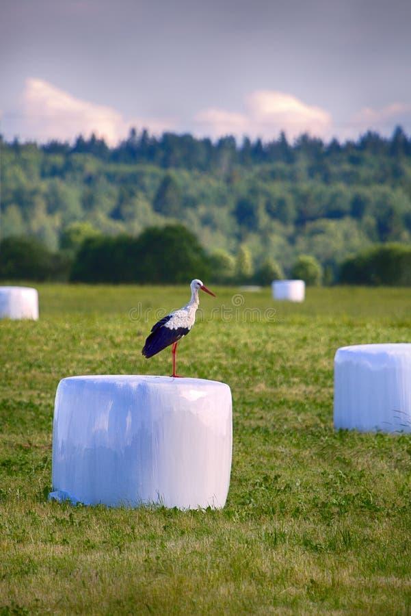 Rolniczy krajobraz z bocianami, siana próżniowy kocowanie fotografia royalty free