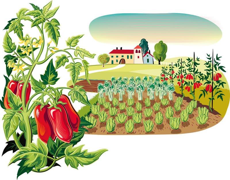 Rolniczy krajobraz z rośliną San Marzano pomidory, royalty ilustracja