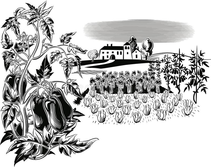 Rolniczy krajobraz z rośliną San Marzano pomidory, ilustracja wektor