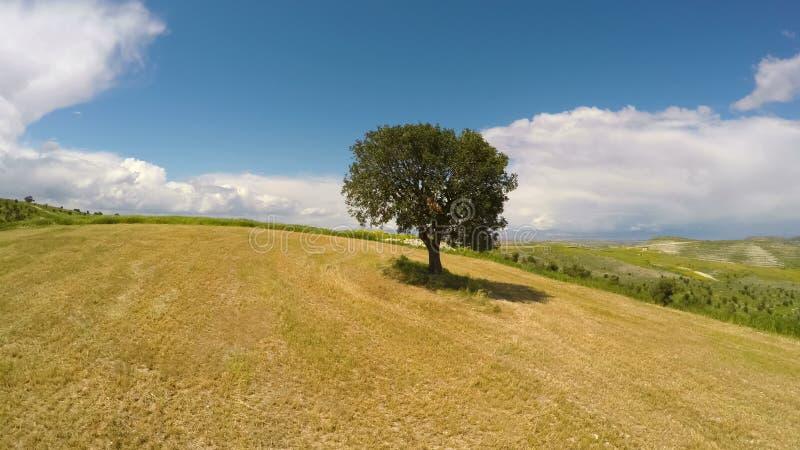 Rolniczy pola, osamotniona drzewna pozycja na wzgórze relaksującym widoku z lotu ptaka, samotność zdjęcia stock