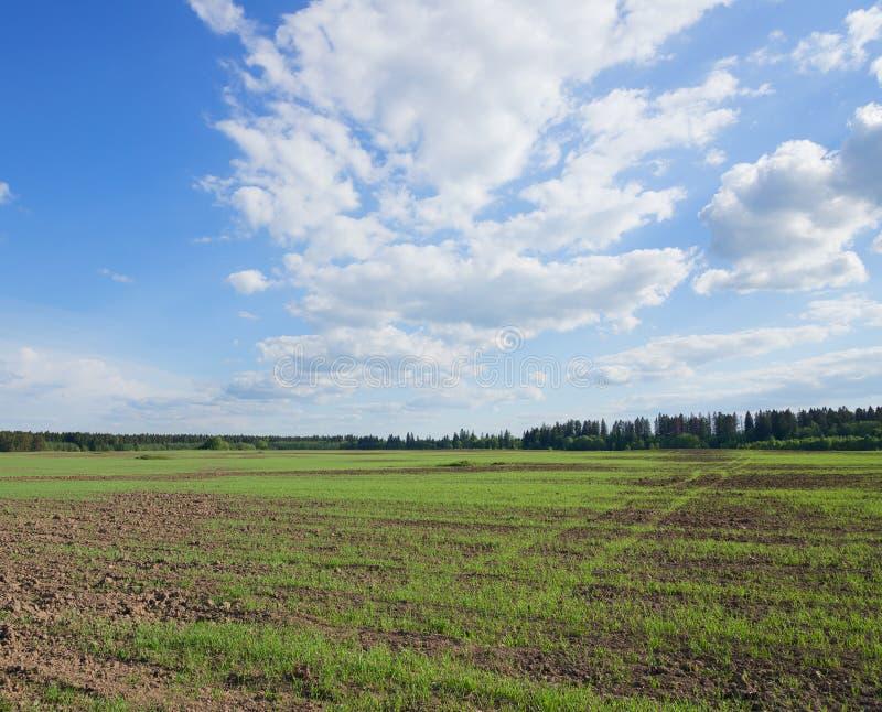 Rolniczy pole na którym r młodej trawy obraz stock