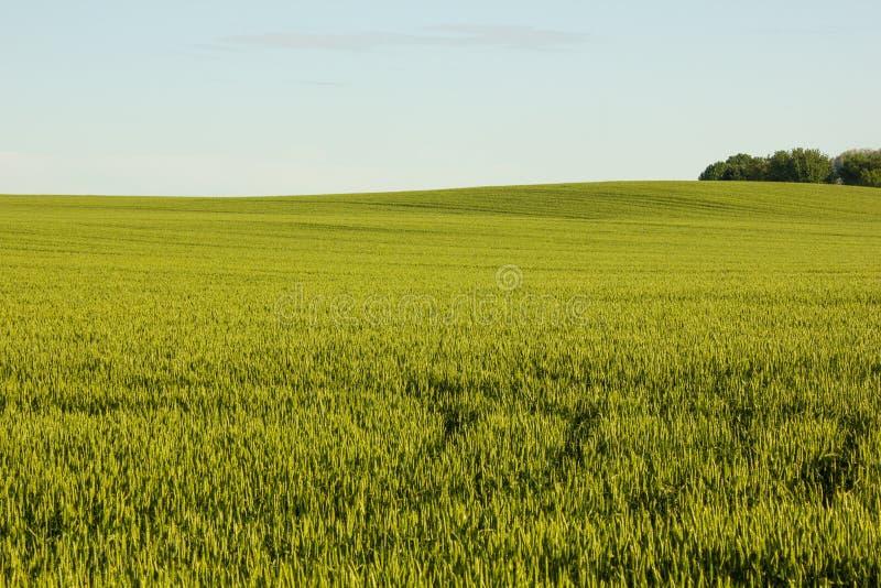 Rolniczy pole w Chorwacja fotografia stock