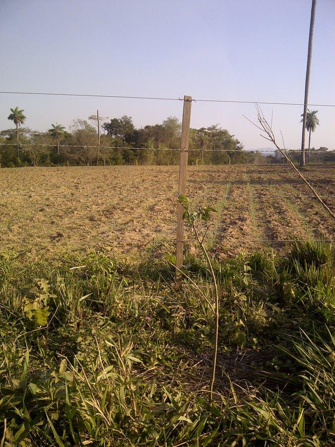 Rolniczy pole, zielone rośliny i drzewa, fotografia royalty free