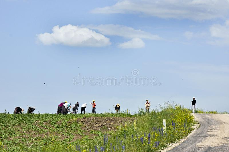 Rolniczy pracownicy w Amasya zdjęcia stock