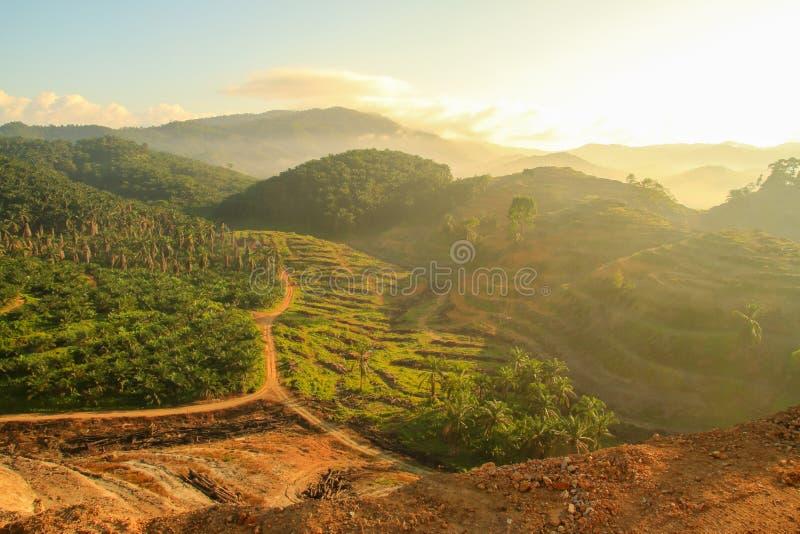 Download Rolniczy Tereny Dla Zasadzać Nafcianej Palmy Zdjęcie Stock - Obraz złożonej z ekonomiczny, ziemia: 57650742