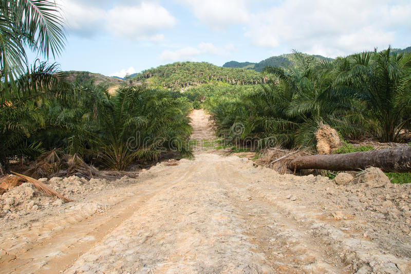 Download Rolniczy Tereny Dla Zasadzać Nafcianej Palmy Obraz Stock - Obraz złożonej z słońce, drzewa: 57653013